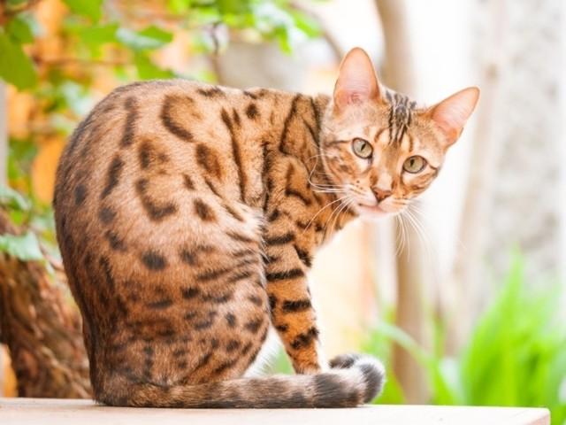 7 причин частого мочеиспускания у кота - как лечить