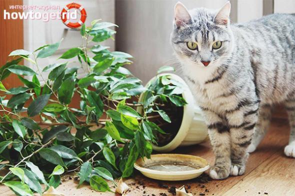 4 причины почему кот ест землю - что делать