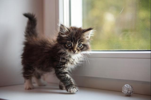 Норма глюкозы у кошек в крови