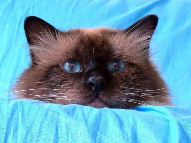 9 причин поноса у кошки - симптомы и лечение