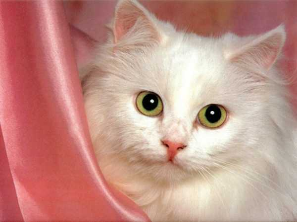 3 причины почему кошка часто ходит в туалет по большому