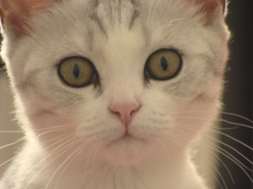 Сколько кошка кормит котят молоком