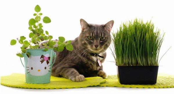 Чем лечить кота при отравлении