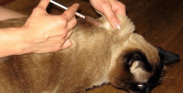 Интерферон для кошек - инструкция по применению