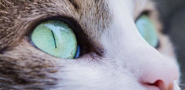 Какое зрение у кошек - черно-белое или цветное