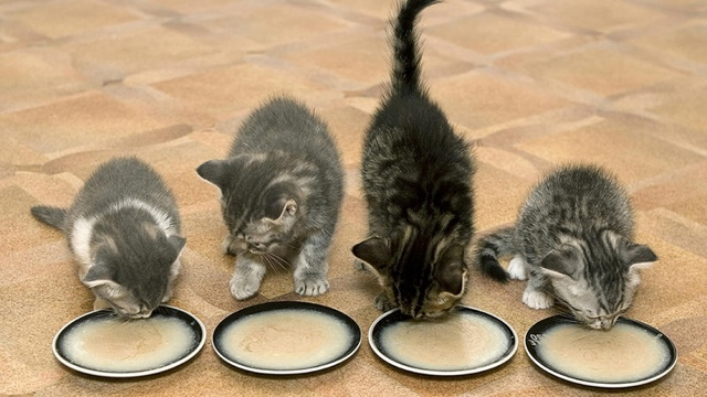 Какие крупы можно давать кошкам, а какие нельзя