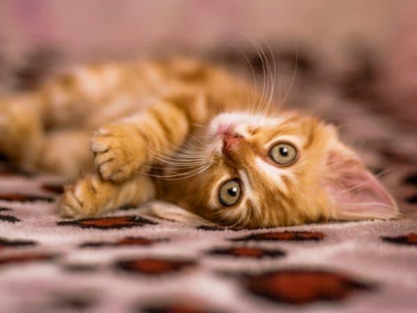 Необычные имена для кошек - оригинальные клички
