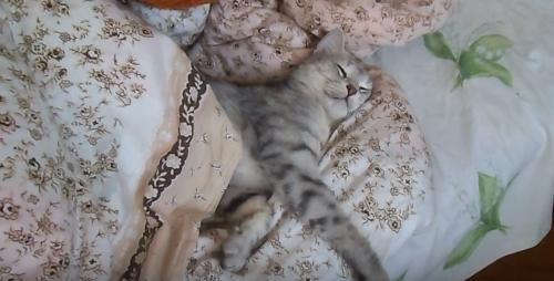 Кот спит на кровати, для чего ложатся спать с хозяевами