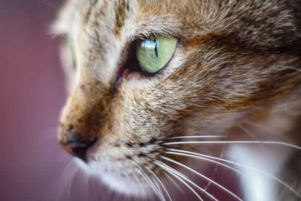 Сульфацил для кошек: инструкция по применению