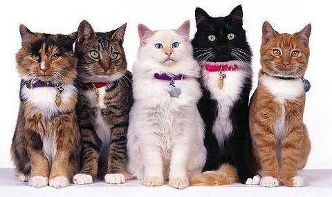 Сколько пород кошек существует в мире