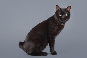 Перелом хвоста у кошки - 5 симптомов, виды, лечение