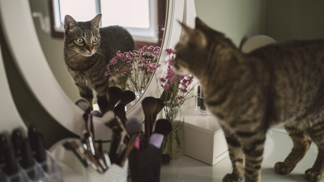Кот агрессивный - как успокоить и что делать