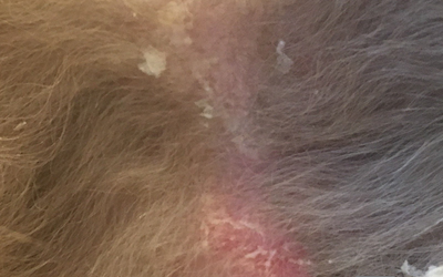У кошки на ушах выпадает шерсть