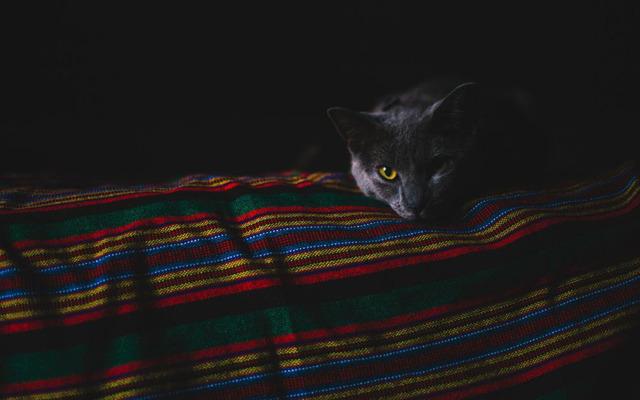 9 причин почему у кошки болит живот - симптомы и что делать