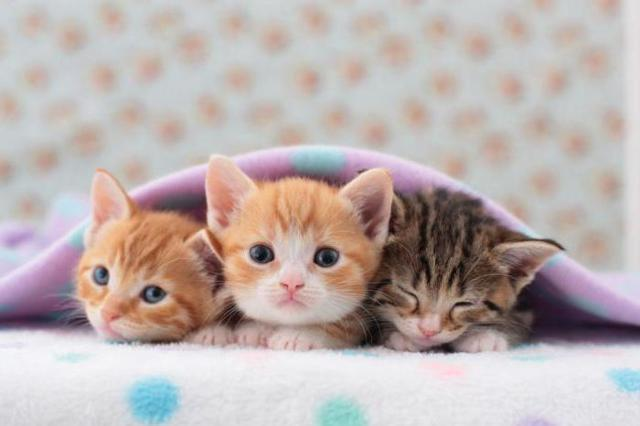 Можно ли размачивать сухой корм для кошек