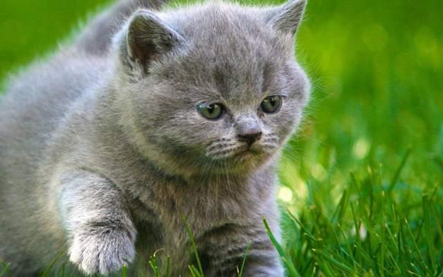 Как правильно воспитывать котенка - советы и правила
