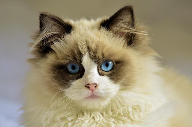 Что дать кошке чтобы не просила кота - народные средства