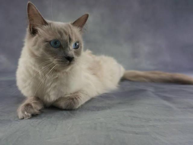 Власоеды у кошек - симптомы, лечение и профилактика