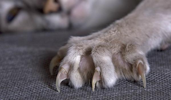 Почему у кота слоятся когти - причины и что делать