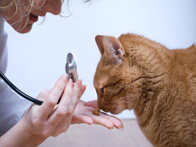 Как вылечить кота от блох?