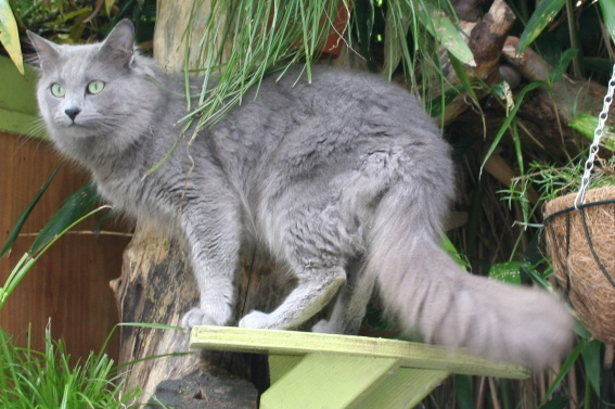 Породы кошек с зелеными глазами - фото и описание