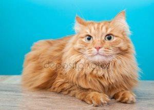 Зиртек для кошек - дозировка, инструкция по применению