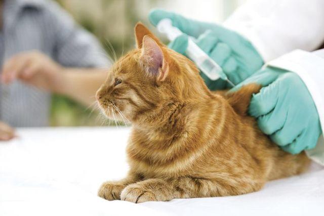 Витафел С для кошек - инструкция по применению, состав, цена