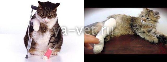 Кот сломал лапу - что делать, первая помощь
