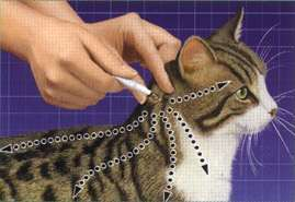 Сколько живут блохи у кошек?
