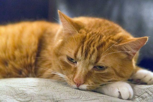 5 причин, почему кот орет по ночам