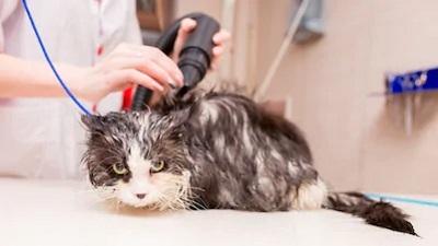 Уход за шерстью кошки - особенности ухода в зависимости от породы