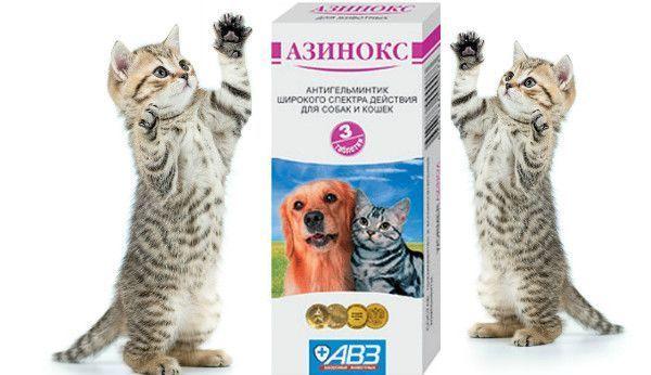 Азинокс для кошек - инструкция по применению препарата