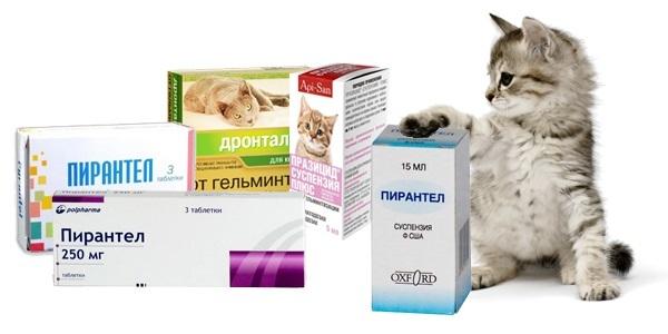Как давать Пирантел кошке
