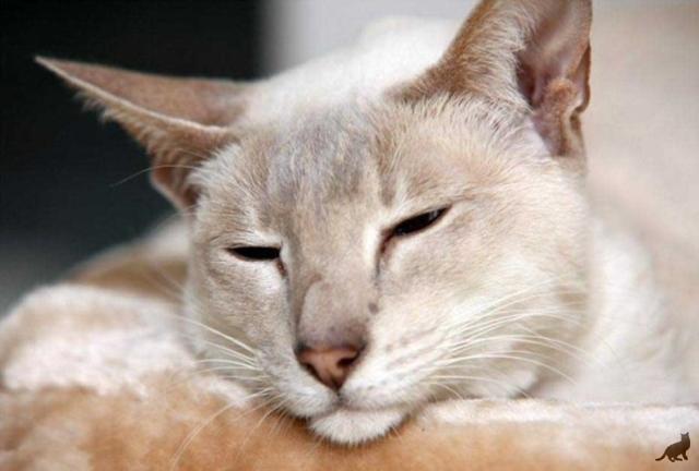 Сколько кошка может прожить без еды до смерти