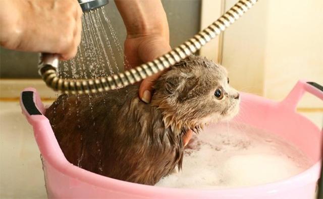Хозяйственное мыло от блох у кошки