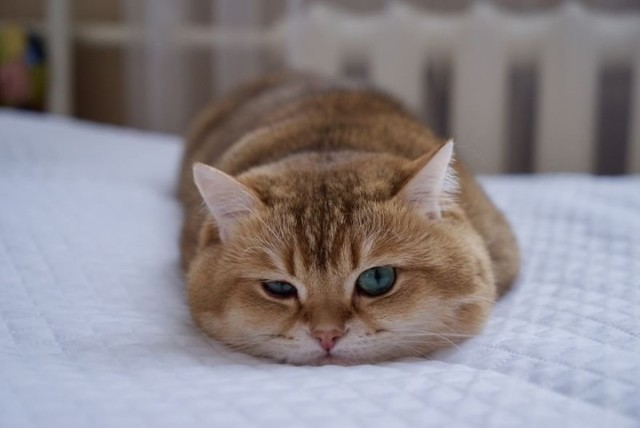 Белый кал у кошки - причины и лечение