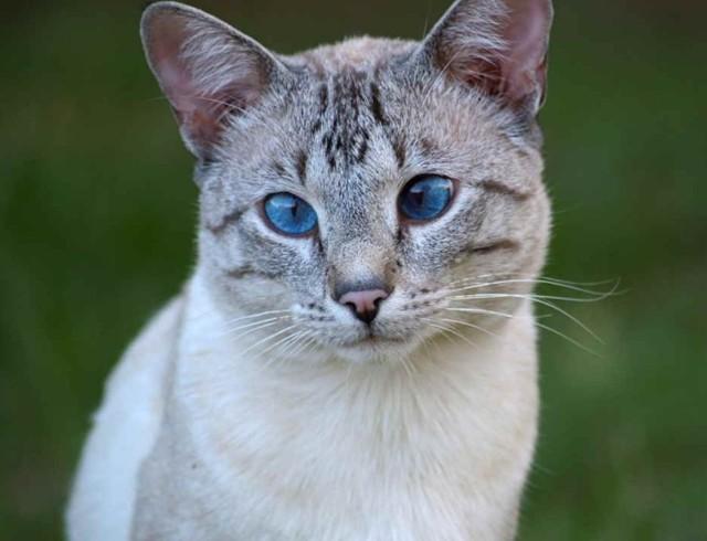 7 симптомов бешенства у кошек на ранних сроках