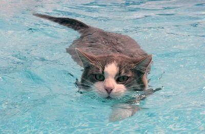 Как приучить котенка купаться в ванной