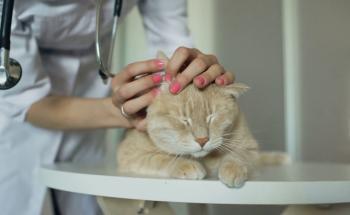 4 причины микроспории у кошек - симптомы и лечение