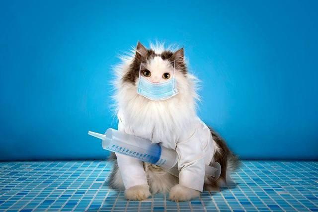 График прививок котятам - когда делать?