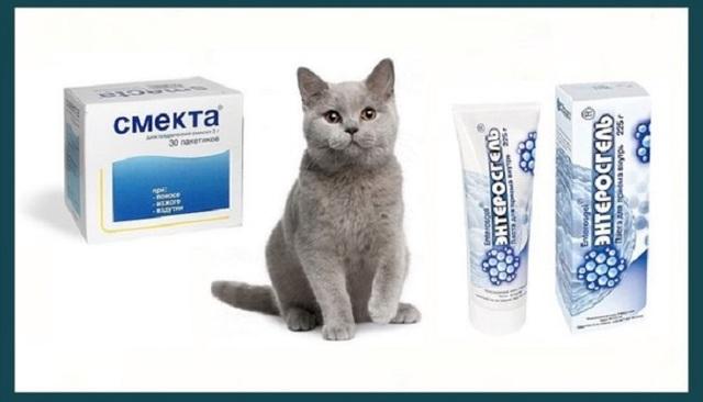 9 причин почему у кошки понос с кровью и слизью - симптомы, лечение, профилактика