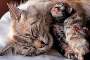 7 причин мастита у кошки - лечение в домашних условиях