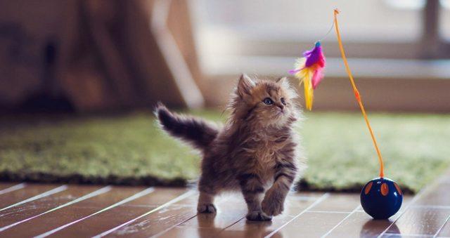 Как дрессировать кота в домашних условиях