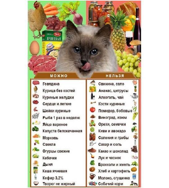 Почему коты любят валерьянку - действие валерьянки