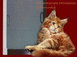 Рыбий жир коту - можно или нет