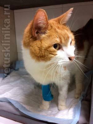 Повышена мочевина у кота в крови: причины и что делать