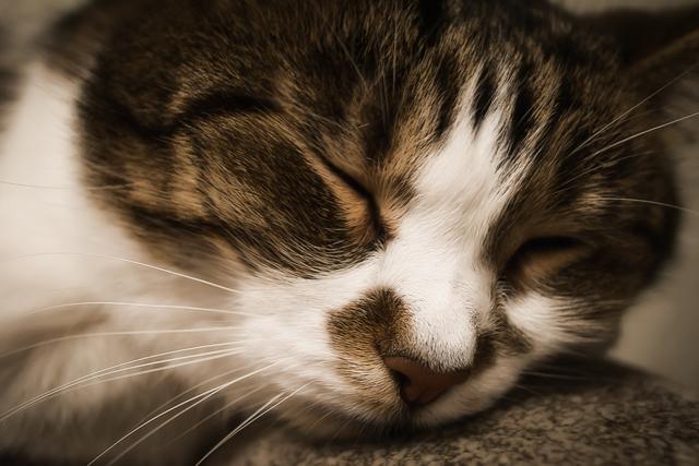 Как и где похоронить кошку - ритуальные особенности