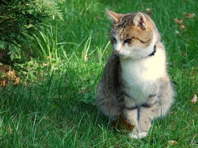 Где у кошки находится сердце?