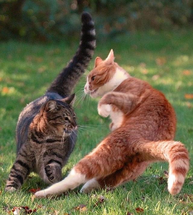 Абсцесс у кота: что делать