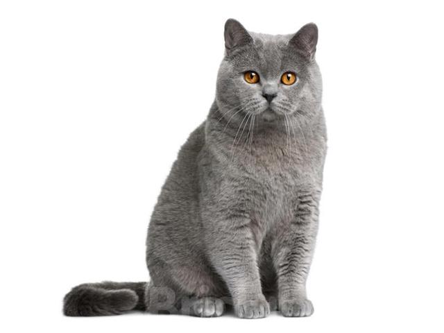 Какие обои не дерут кошки?